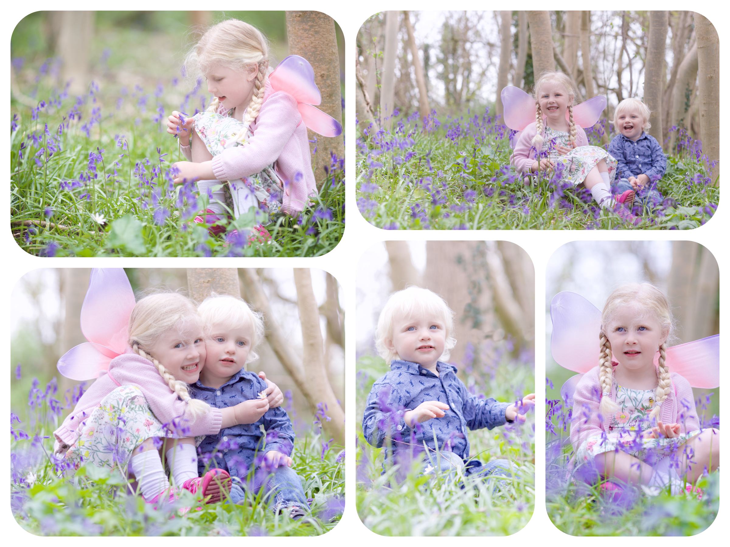 Molly & Oscar Bluebells Collage