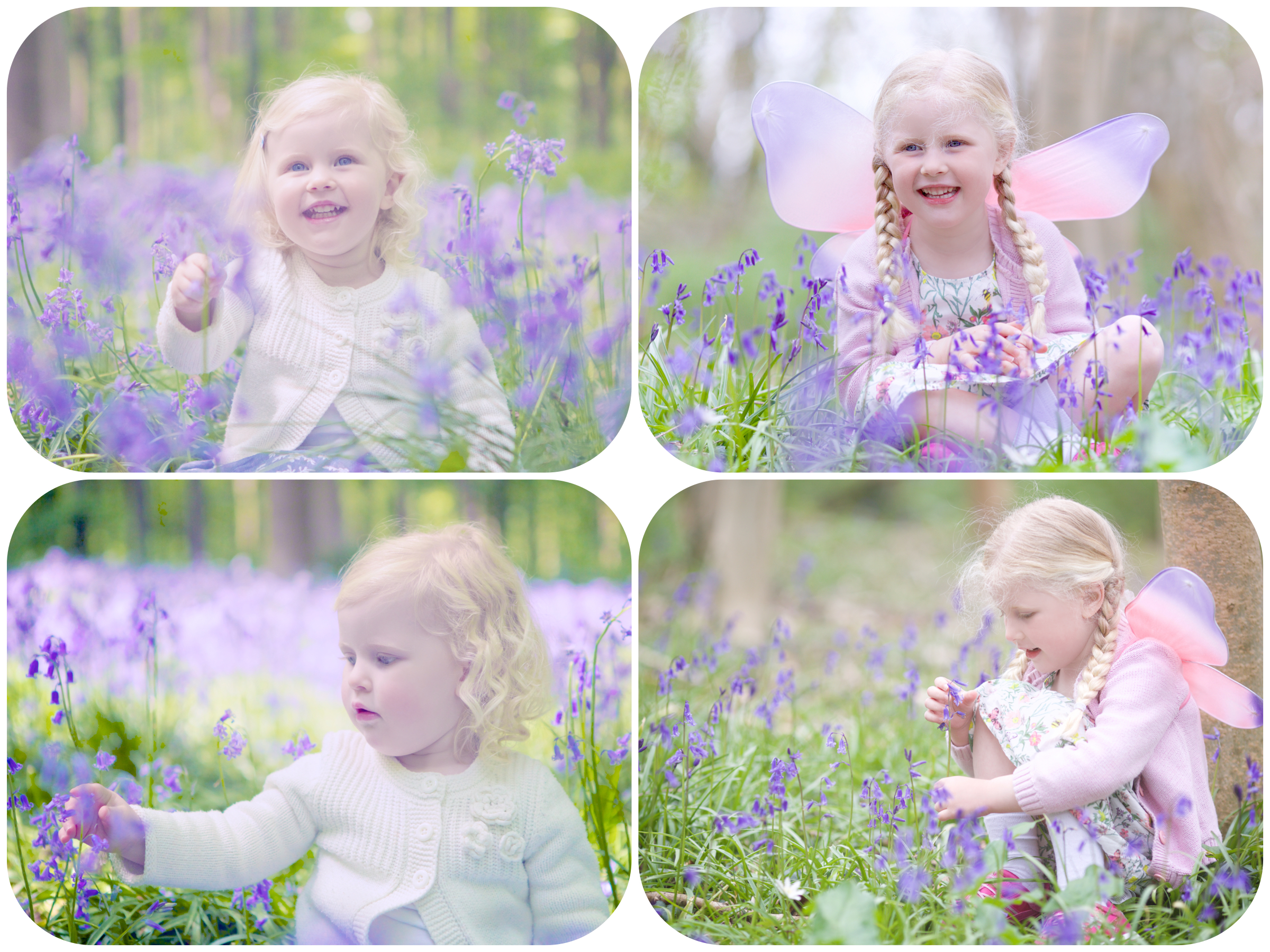 Molly in the bluebells collage